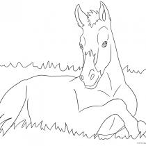 Pferde Ausmalbilder Ausmalbilder Pferde Viele Malvorlagen Mit Pferden Ausmalbilder Pferde Malvorlagen Pferde Ausmalbilder