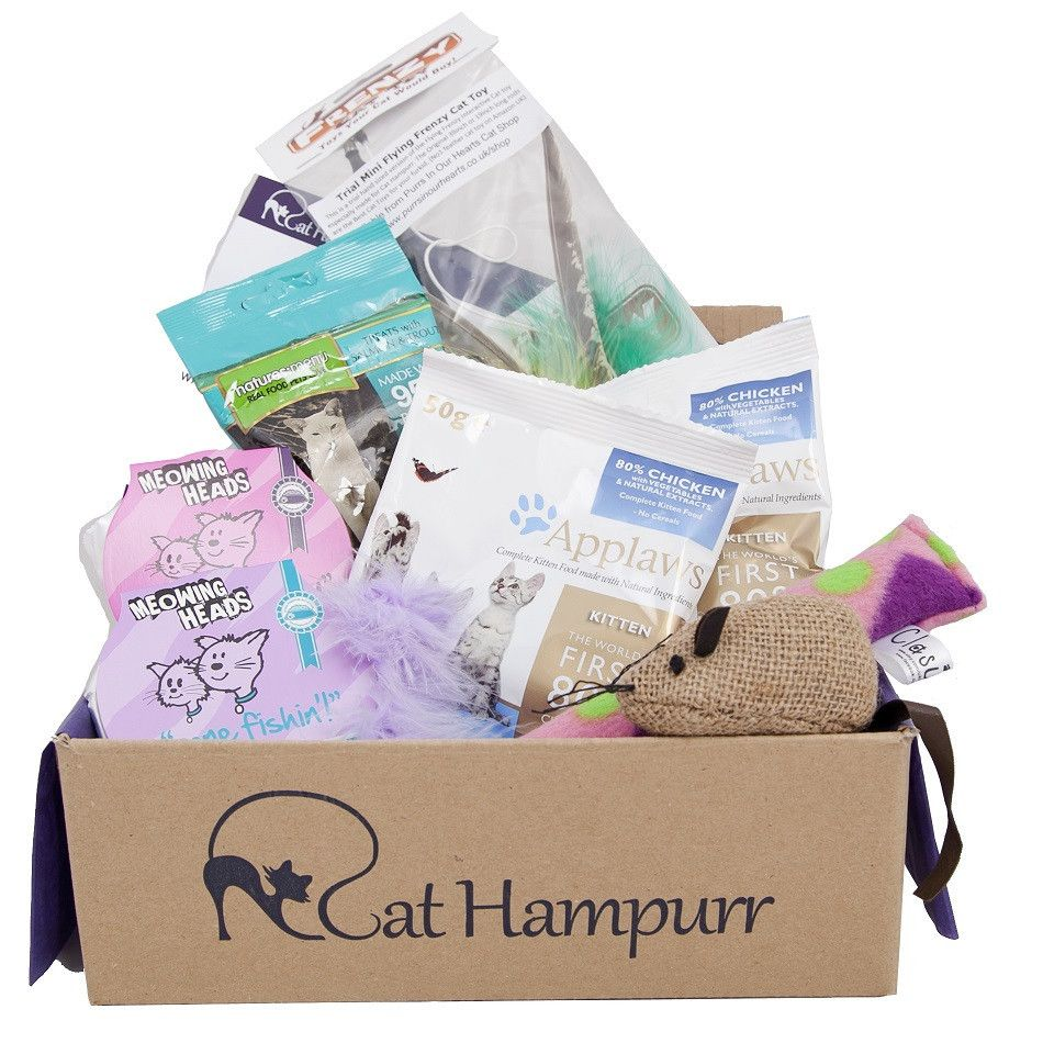 Kitten Gift Box Kittens Gifts Cat Christmas Gift Cool Cat Toys