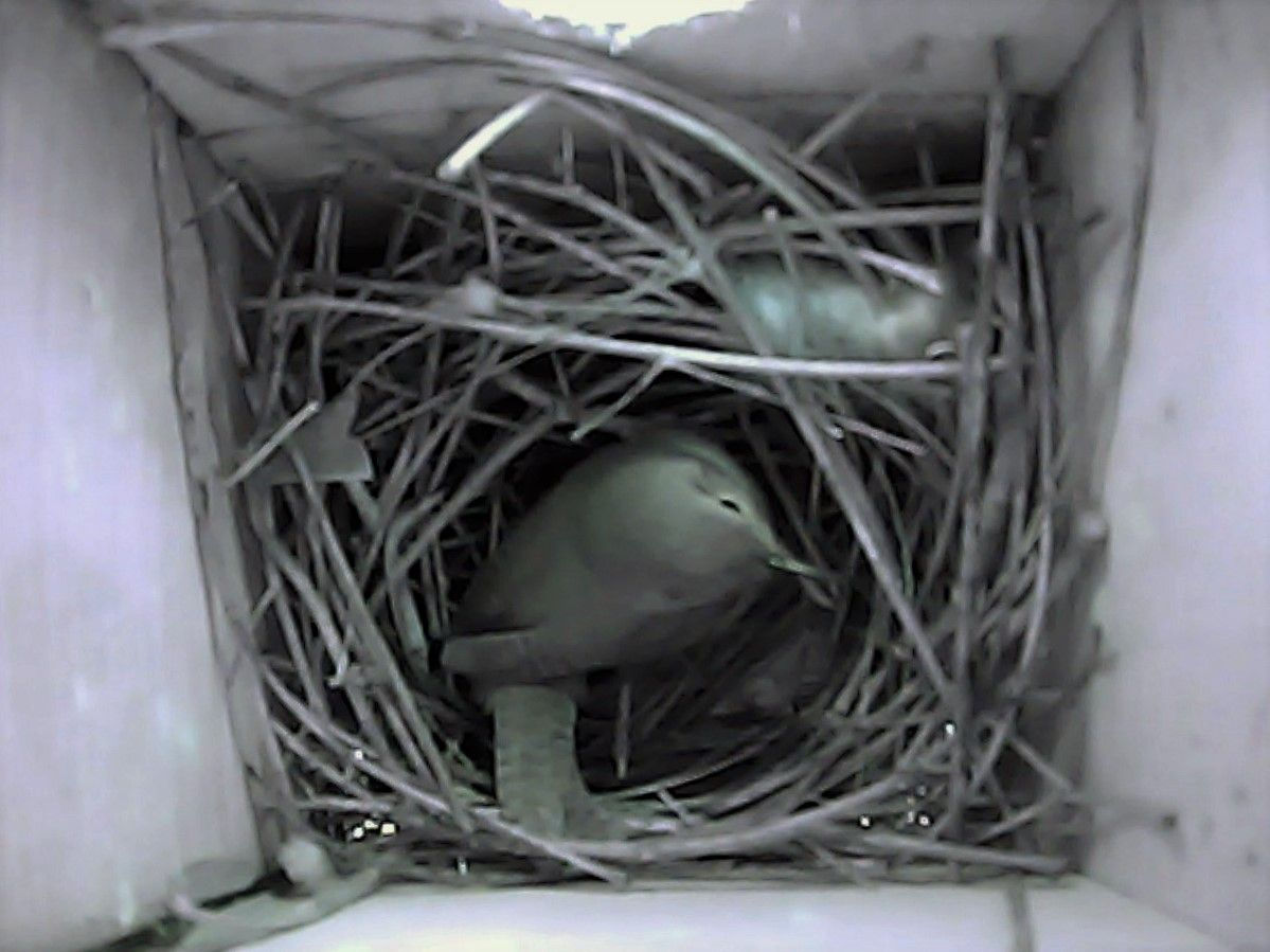 Wren Building A Nest In A Www Birdgazer Net Nest Cam Birdhouse Bird Houses Nest Cam Trash Can