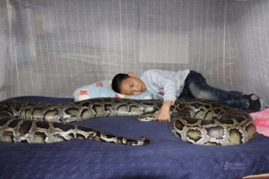 Image result for sleeping with a snake