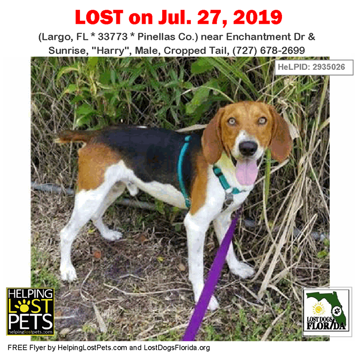 Lost Dog Have You Seen Harry His Tail Is Cropped Lostdog Harry Largo Enchantment Drive Sunrise Harry Male 727 Losing A Dog Losing A Pet Dogs