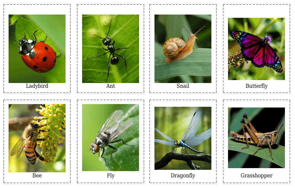 Insects Flashcards Printable Flash Cards Flash Cards Free Flashcards For Kids