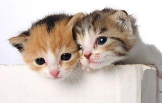 子猫の性格や性別について
