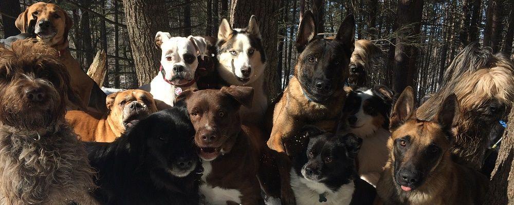 Scott Dunmore Dog Training Boston Ma Doggy Dogs Dog Training