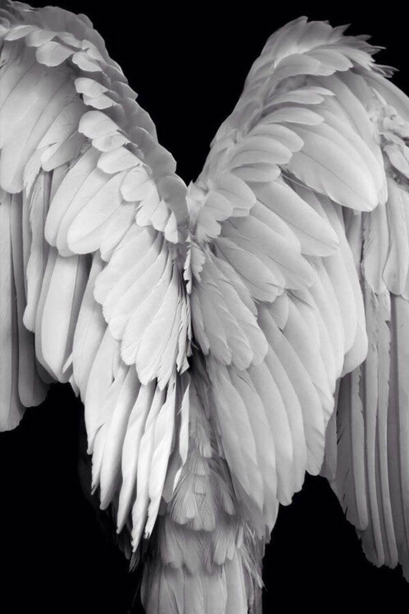 Картинки крыло ангела, днем свадьбы годовщиной