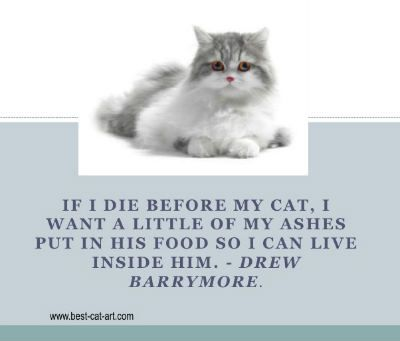 Loss Of My Cat Quotes | Best Cat Cute Pictures, Meme ...