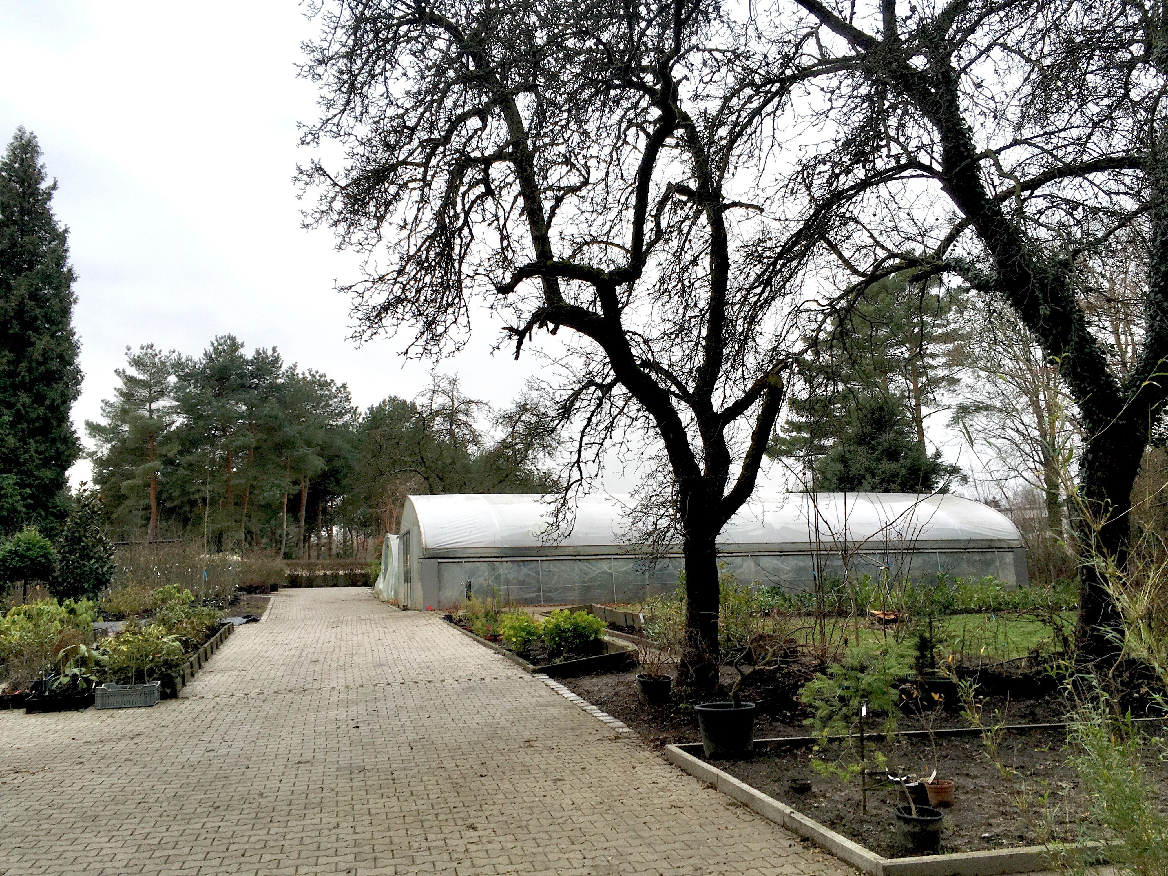 Pin Von Auf Botanischer Garten Rombergpark Botanischer Garten Garten Rom
