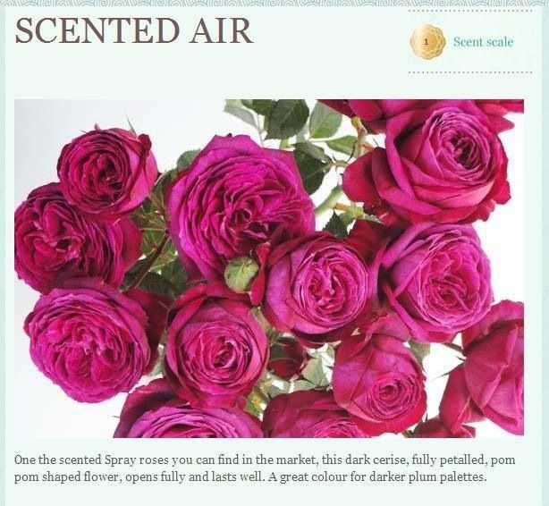 Scented air garden roses all year hot pink flowers scented air garden roses all year mightylinksfo Image collections