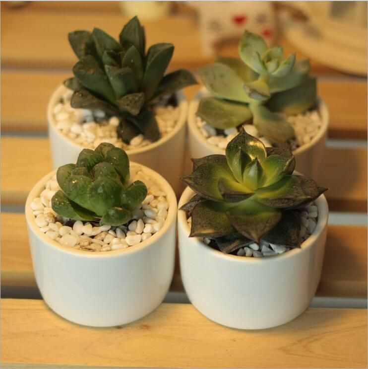 Creative simple white mini potted succulents small round table ceramic pots…