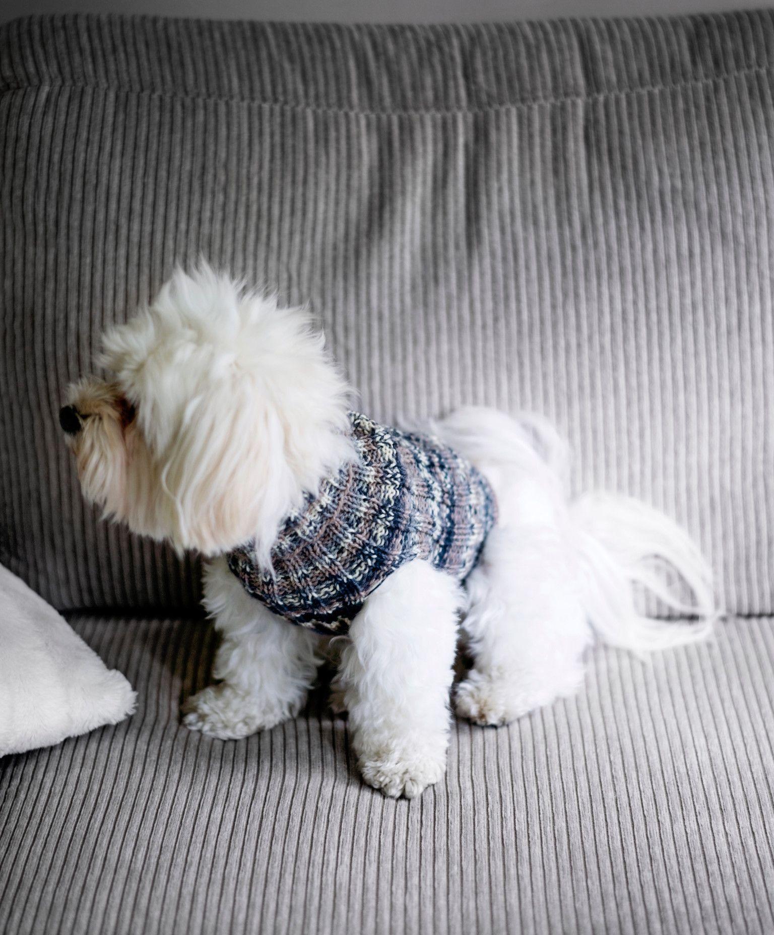 Tyyny Vanhasta Paidasta Koiran Vaatteita Koira Neuleet