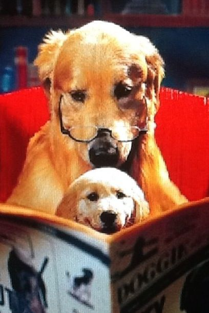 Bedtime story with a Golden Retriever! | Inspirational and