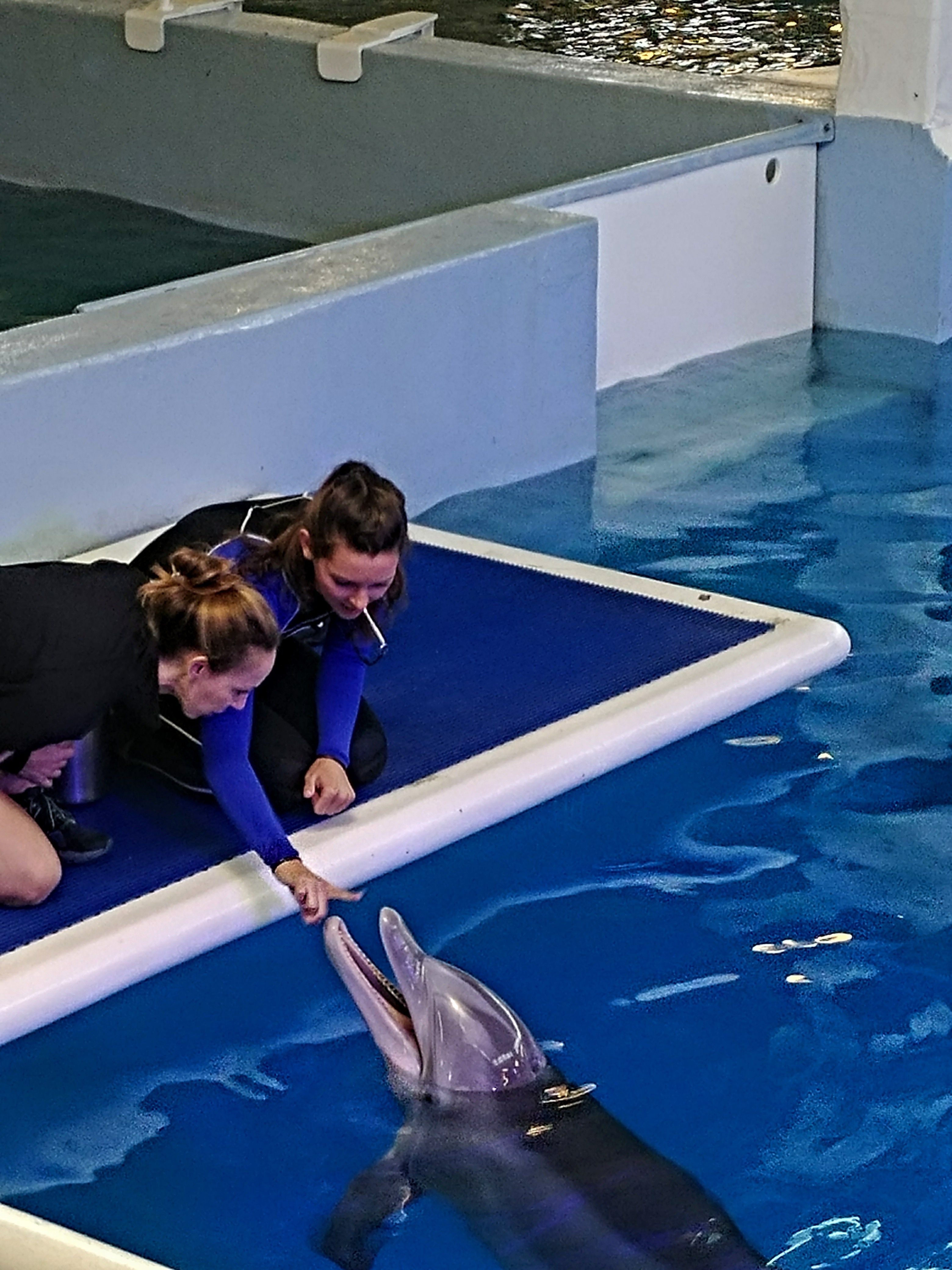 Clearwater Marine Aquarium, Clearwater, Florida