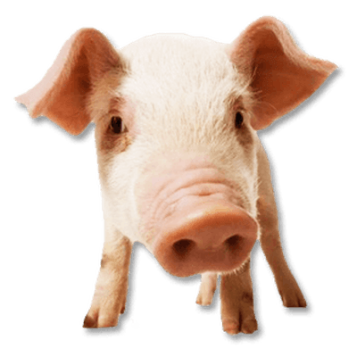 Free Download Pig Face Transparent Png Image Clipart Picture With No Background Animals Pigs Pig Face Pig Png Pig
