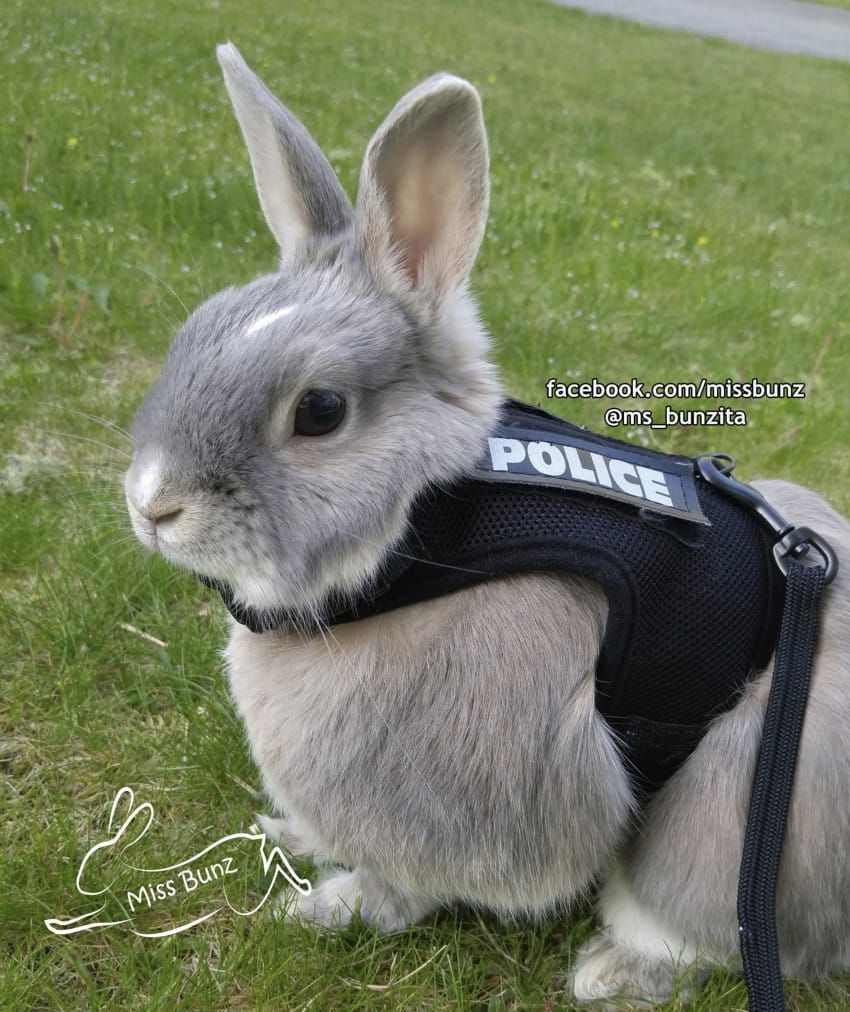 Miss Bunz The Adopted Bunny Wears A Protective Police