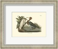 Reddish Egret  Frame