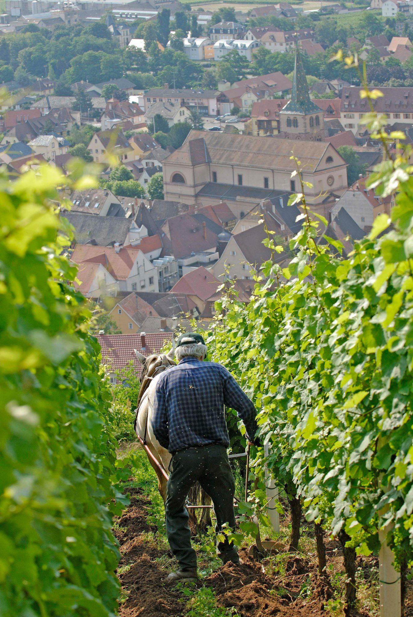 Ferme Auberge Du Molkenrain Route Des Cretes Haut Rhin Ferme Auberge Ferme Auberge Alsace Vosges