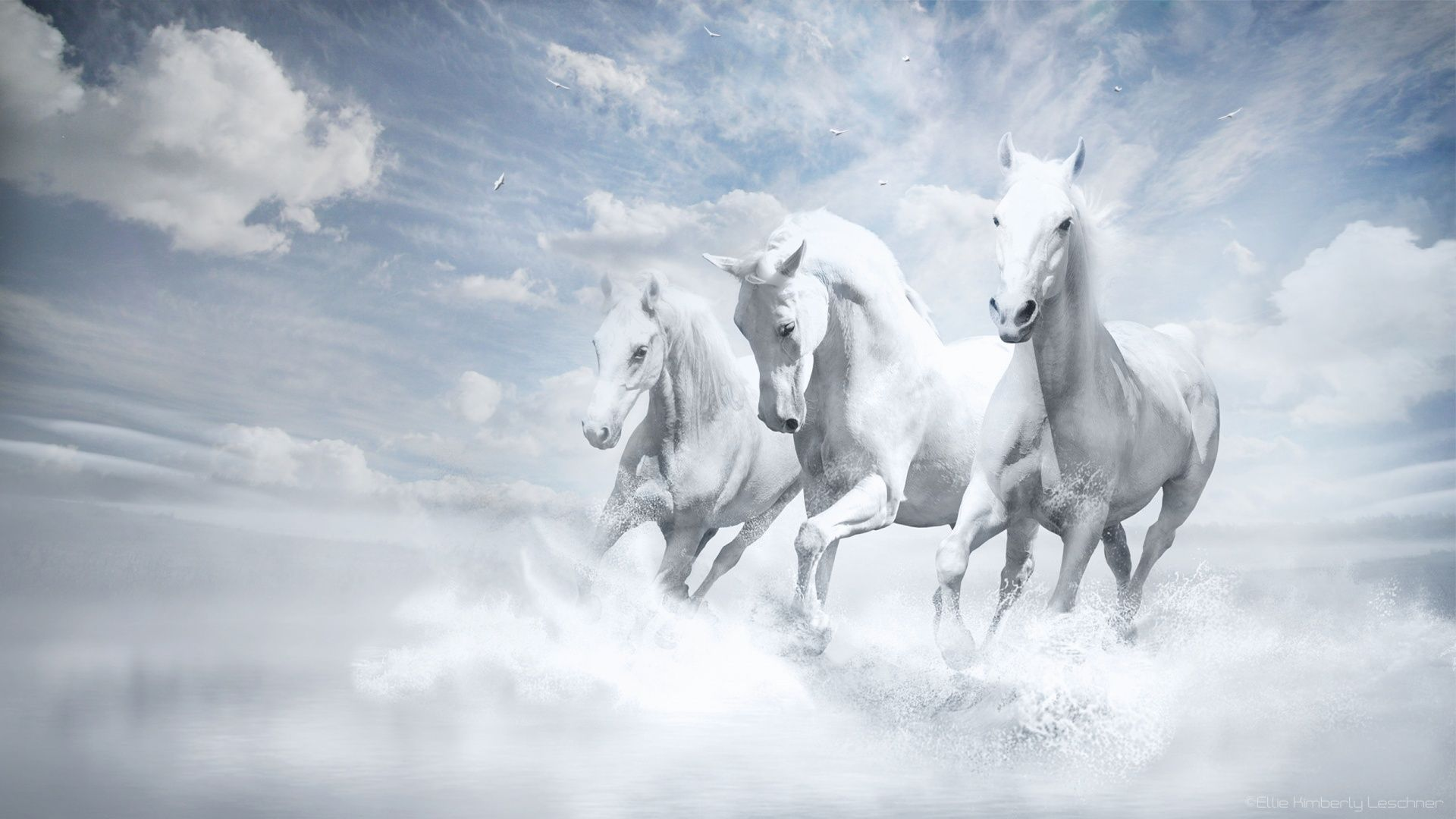 White Horses Hd Wallpaper At Wallpapersmap Com Horse Wallpaper White Horses Horses