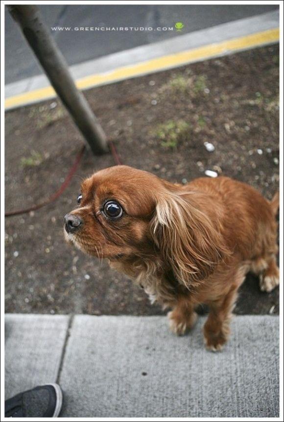 Puppy Dog Eyes | Cutest Paw