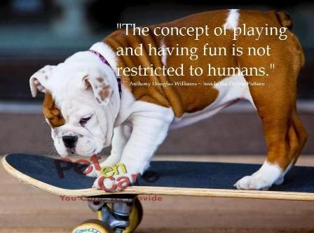 The Concept Of Playing And Having Fun Is Not Restricted To Human