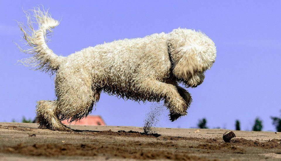 4 ways to get your doodle to stop jumping easiest dogs