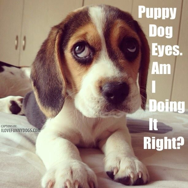 ***Puppy Dog Eyes