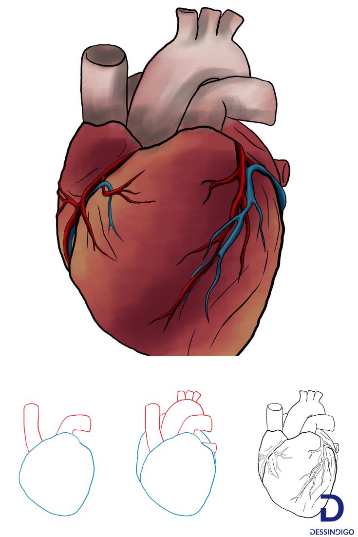 Comment Dessiner Un Coeur Humain Dessin Coeur Comment