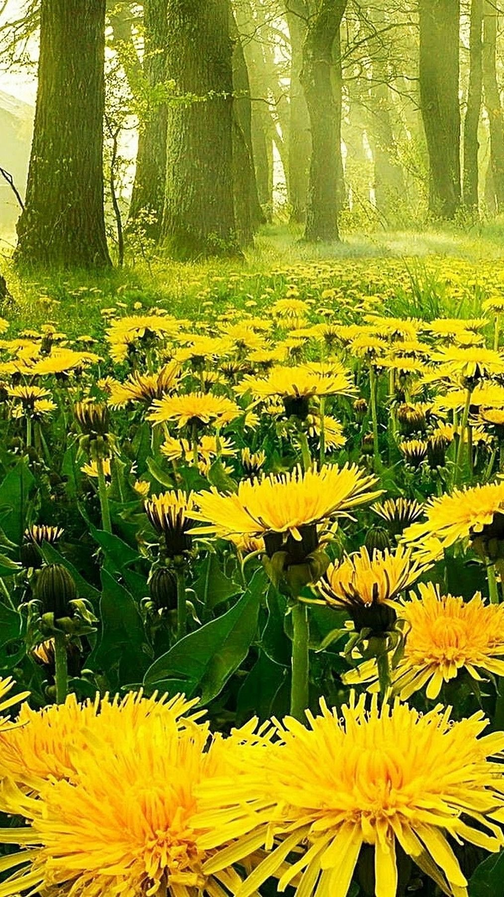 Pin By Mary Azzurro On A Summer Nature Photography Spring Photography Nature Beautiful Nature