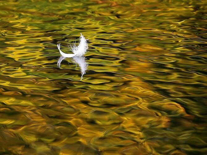 Cisne de plumas, Moscú