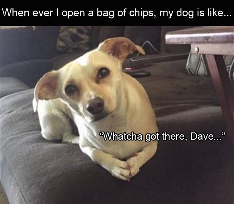 Clean Memes 01 31 2020 Morning In 2020 With Images Funny Dog Faces Funny Dogs Funny Pictures