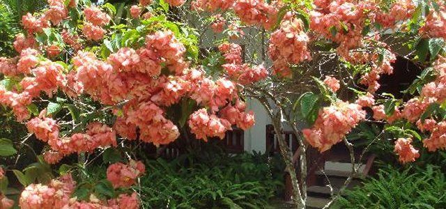 The 12 Top Trees To Plant In Your Garden