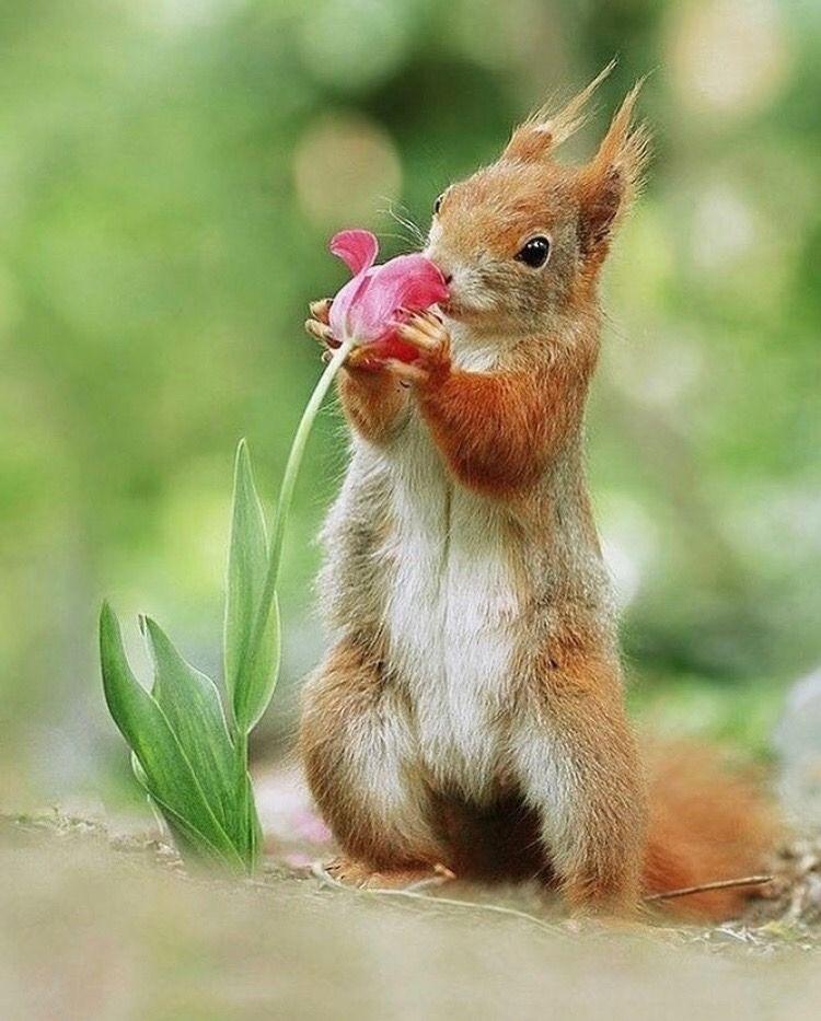 Nature S Beauties Animals Cute Animals Cute Squirrel