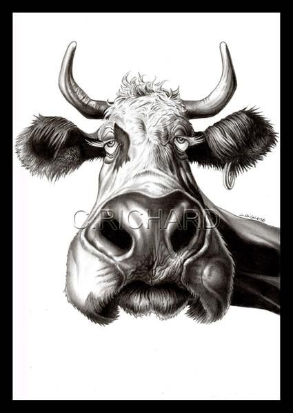 Caricatures animaux in 2019 art pinterest drawings - Animal dessin ...