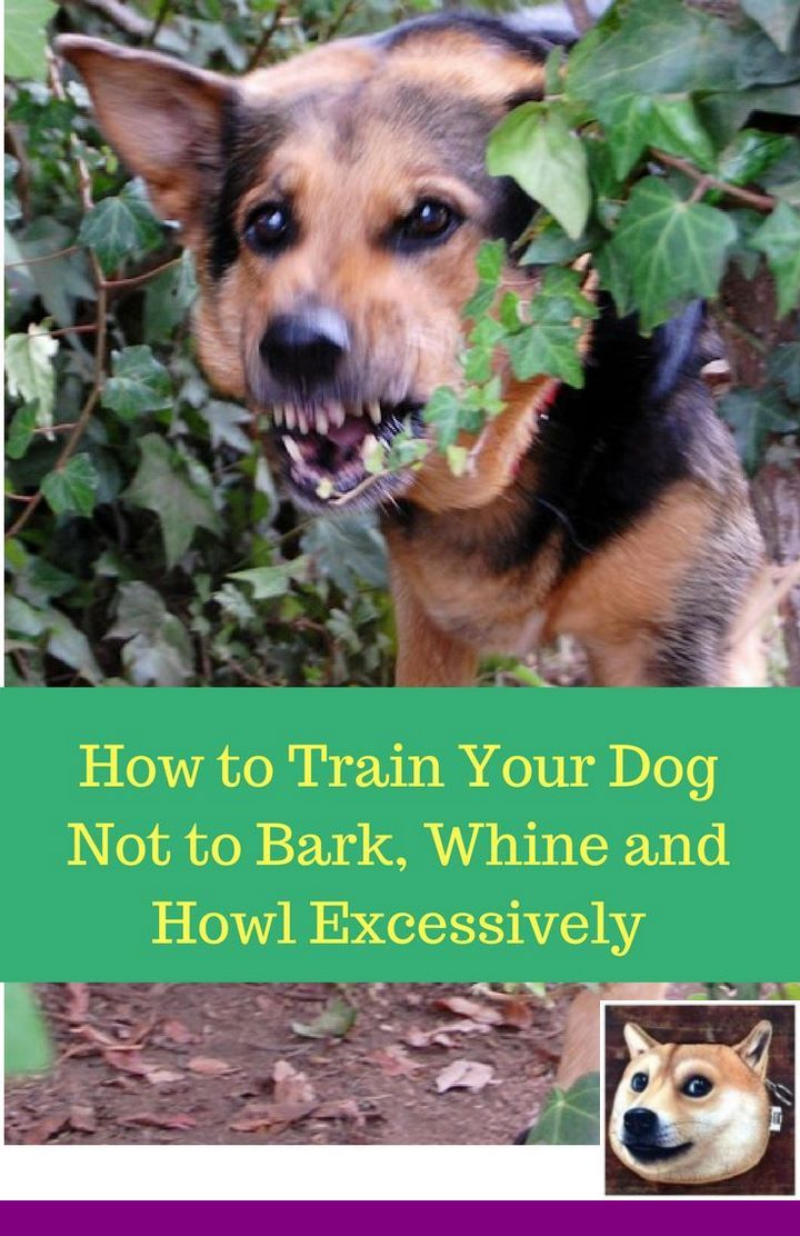 Puppy Training Obedience And Teach Dog To Fetch Dogtraining