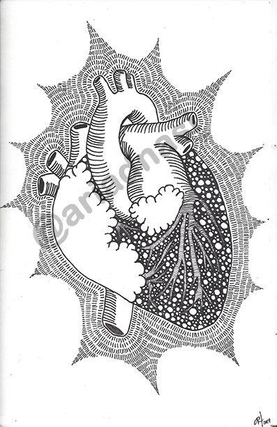 #heart #illustation #ink on #paper #anathomy / #ilustración #corazón #tinta sobre #papel #anatomía