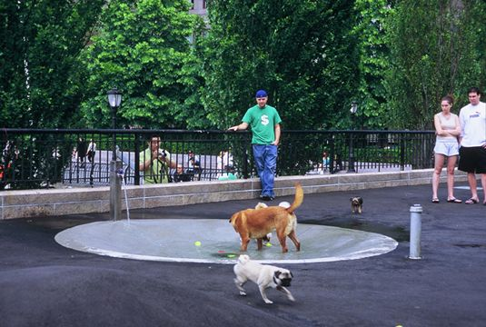 Urban Dog Park Design Considerations Dog Park Design Dog Pool Urban Dog