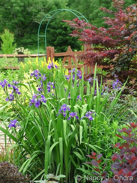 Beautiful Flower Grouping Fox Glove Iris And Others Beautiful Gardens Plants Country Gardening