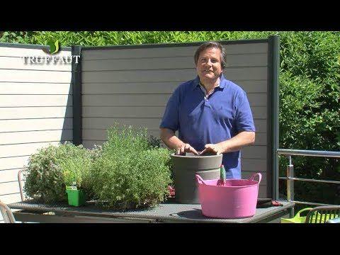 comment planter du thym jardinerie truffaut tv. Black Bedroom Furniture Sets. Home Design Ideas