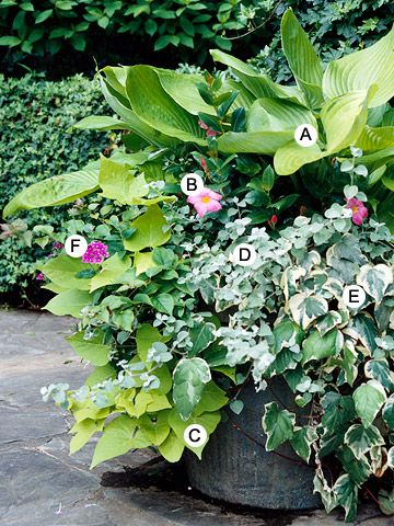 Container Garden Recipes for Shade #shadecontainergardenideas