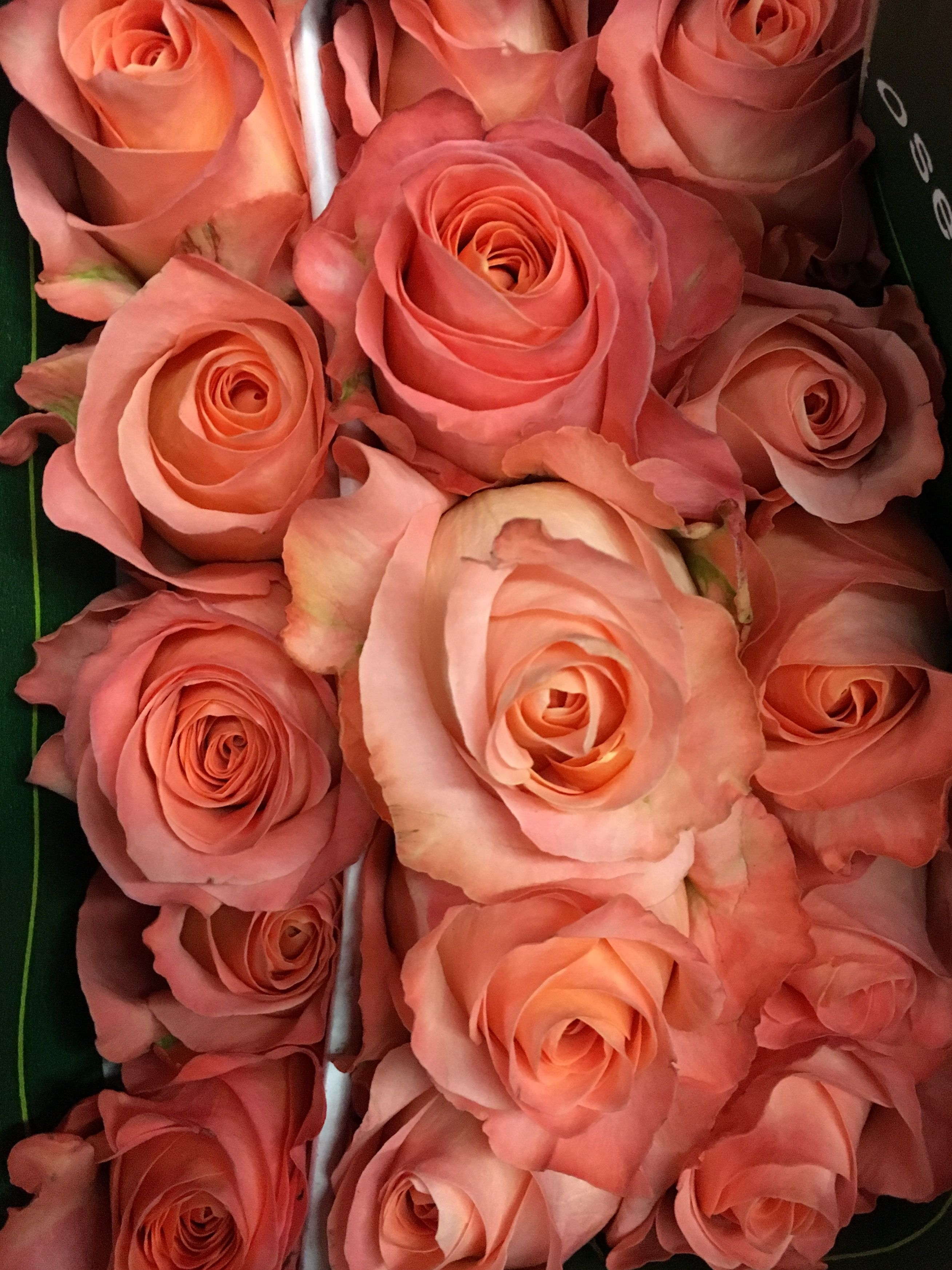 Coral Reef Roses | Flowers | Pinterest | Coral reefs and Flowers