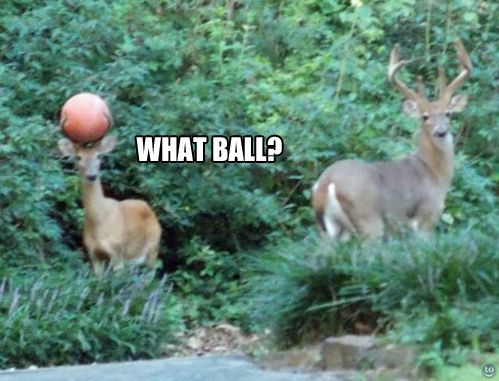 """Sir, I do not appreciate your laughing, nor do I see this """"ball"""" anywhere in the premises."""