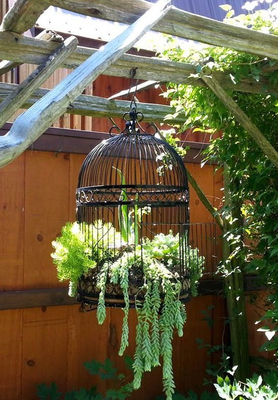 Cage planter :)