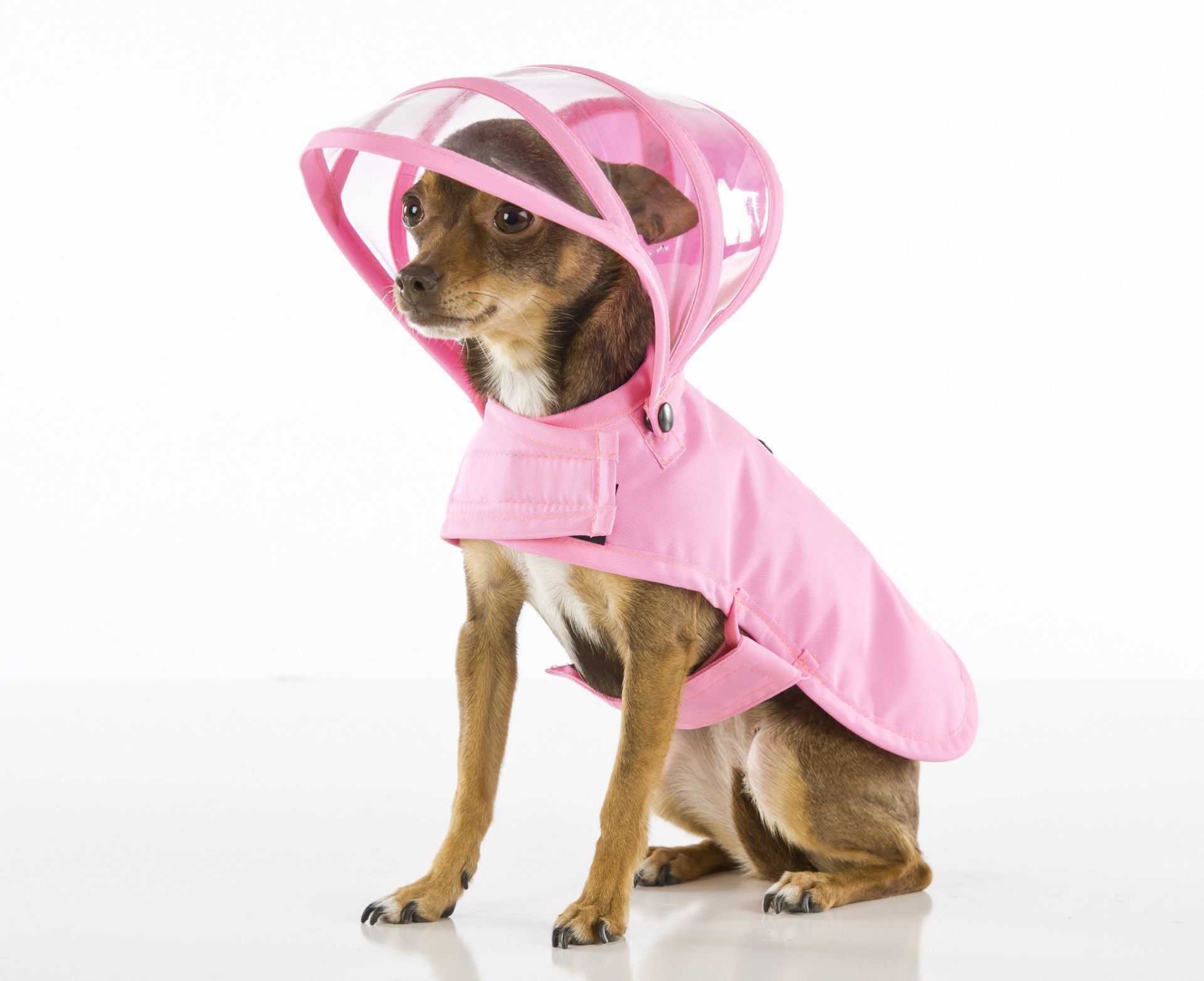 b1bd0d0f8cd Dog Raincoat - Solid Pink Dog Raincoat, Your Dog, Rainbow, Pink, Dogs