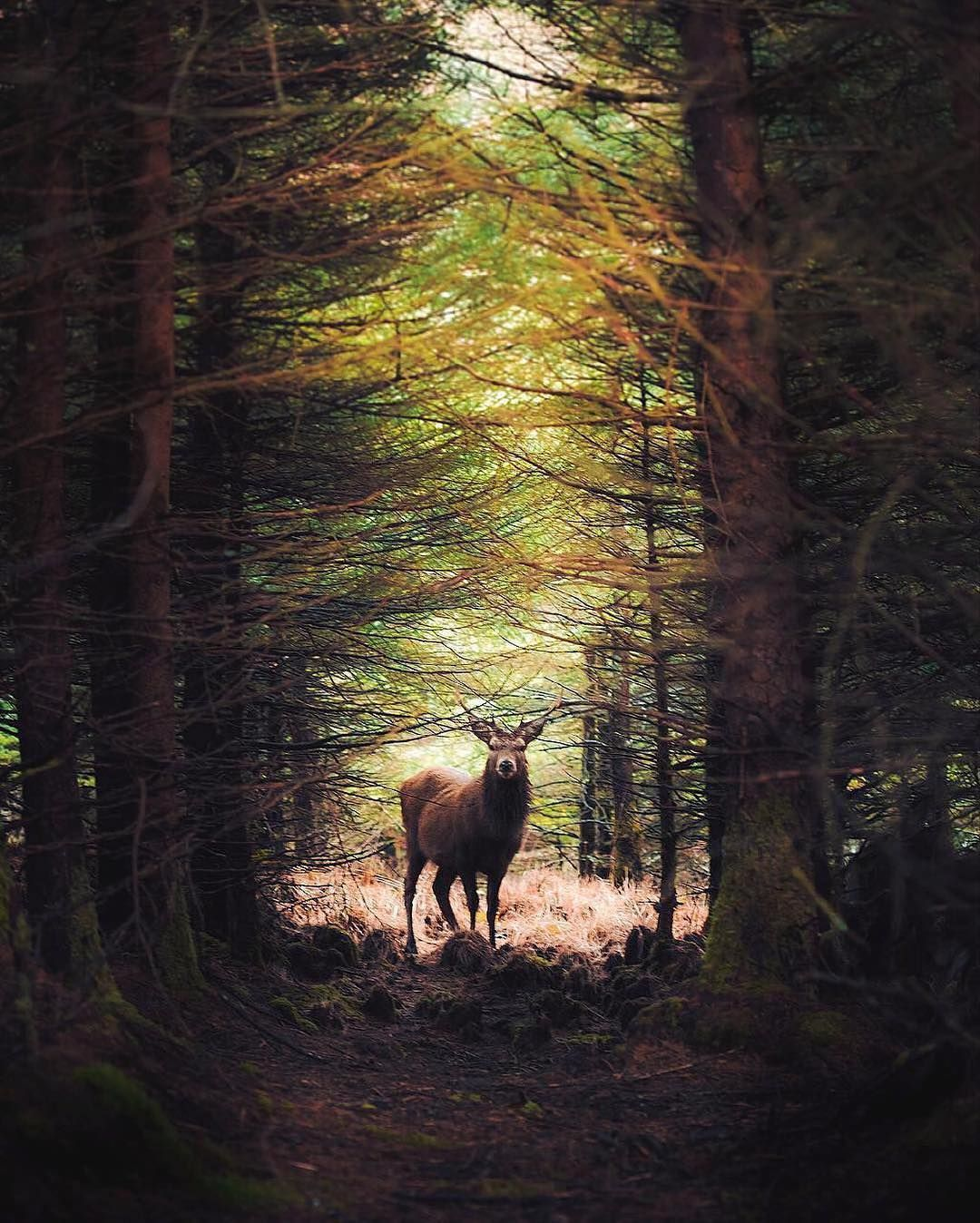 A beutiful encounter in the forest. Scotland. Photo by