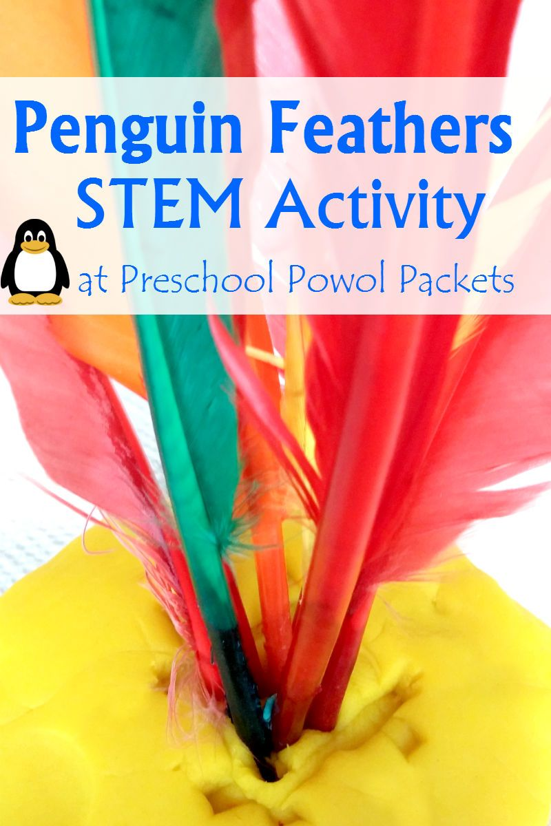 Penguin Feather Science Stem With Preschoolers