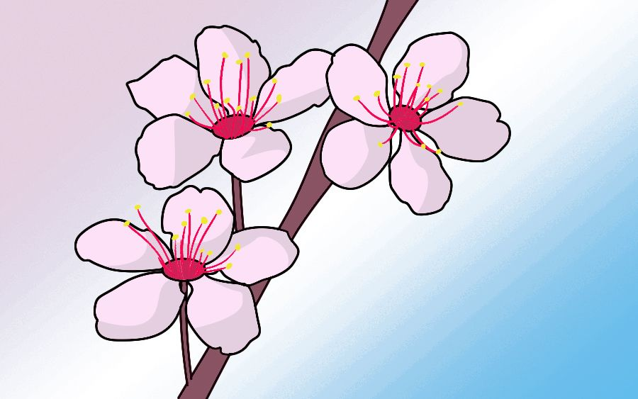How To Draw Cherry Blossoms Draw Central Cherry Blossom Drawing Cherry Blossom Art Cherry Blossom Painting