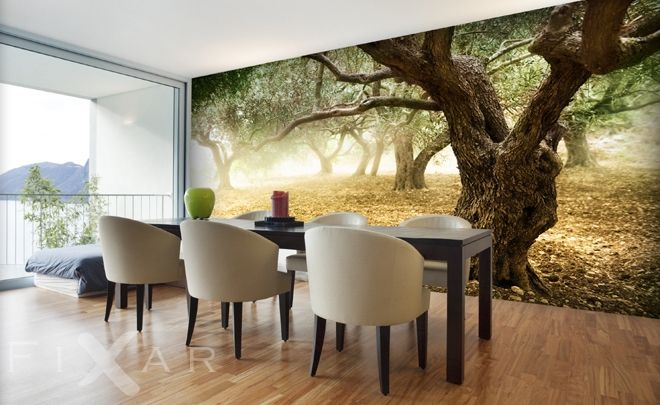 Olivenbäume Fototapeten für Küche und Esszimmer Pinterest
