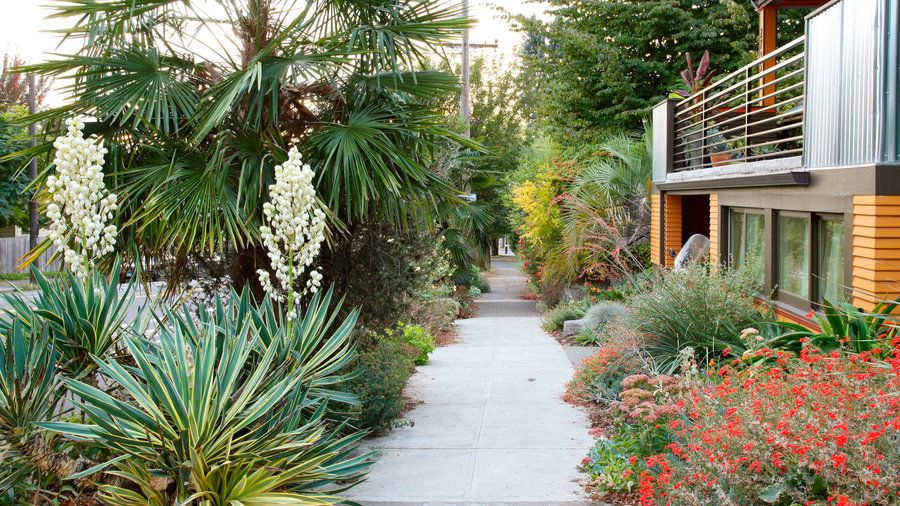 Desert dreams | That narrow strip of land between the sidewalk and street—you know, the spot that the sprinklers don't quite reach—has a big impact on your home's curb appeal. Here are our favorite ideas to transform your hellstrip into a little patch of heaven