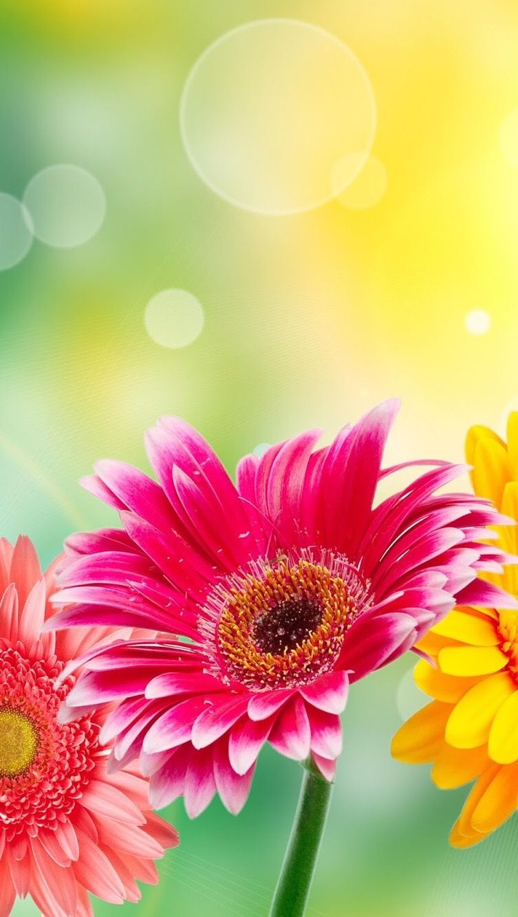 Wallpaper iphone flowers spring wallpapers pinterest