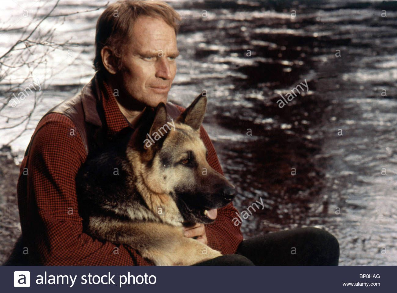Download This Stock Image Charlton Heston The Call Of The Wild 1972 Bp8hag From Alamy S Library Of Millions Of High Re Call Of The Wild Photo Stock Photos
