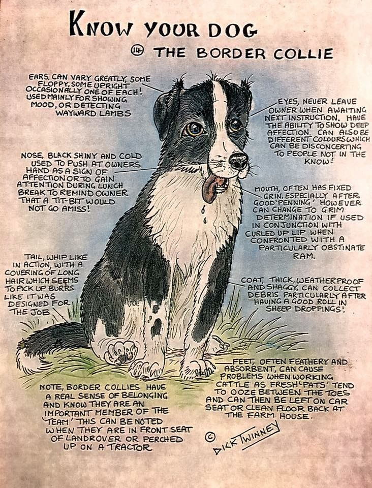 Pin By Dan Marion On Border Collies Rule Collie Breeds Collie